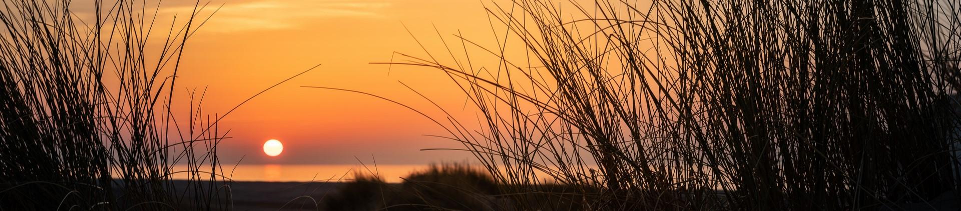 avant plan coucher de soleil (Copier)