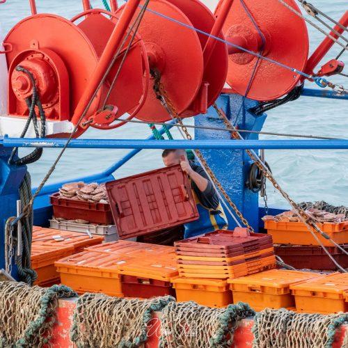 Retour de pêche à la coquille saint-jacques